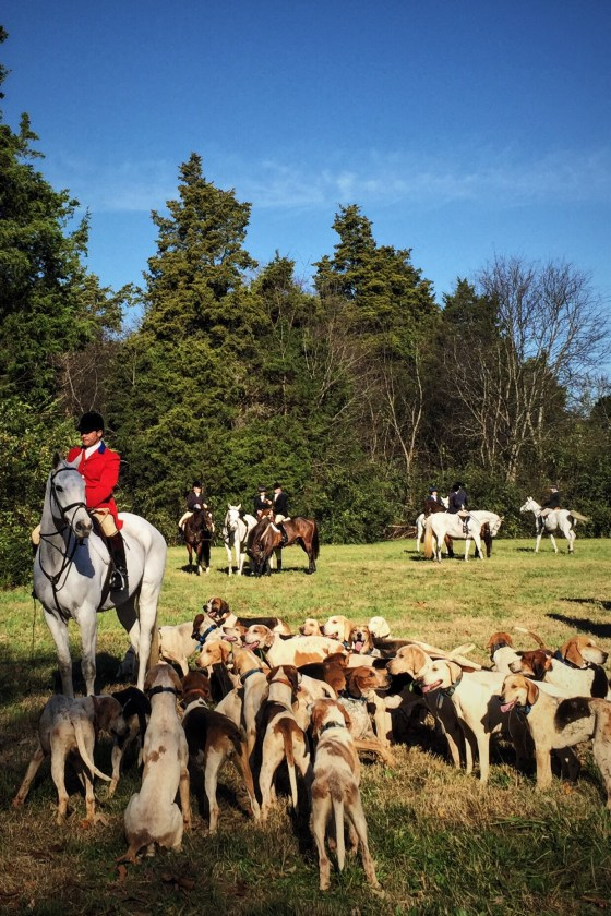 Blessing of the Hounds | for the love of the south