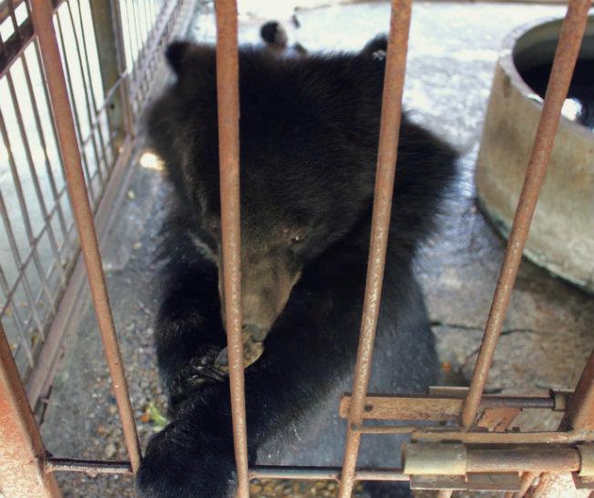 Ungulates-safari-park-bear