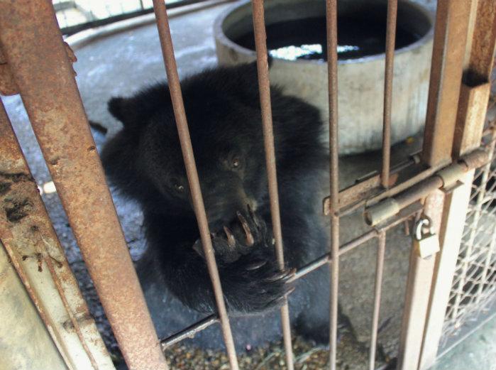 ungulates-safari-park-bear-1