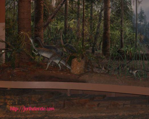 Dinosaur State Park 11