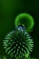 nature-sphère