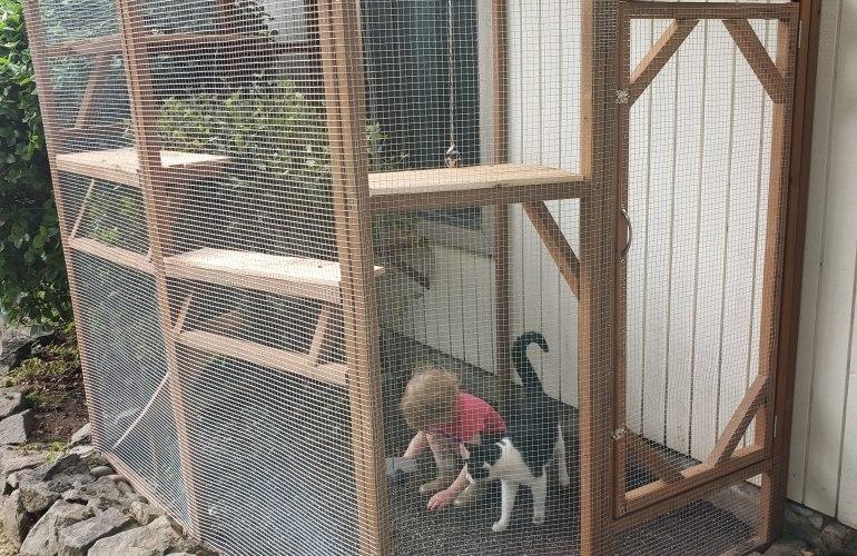 diy catio cat patio