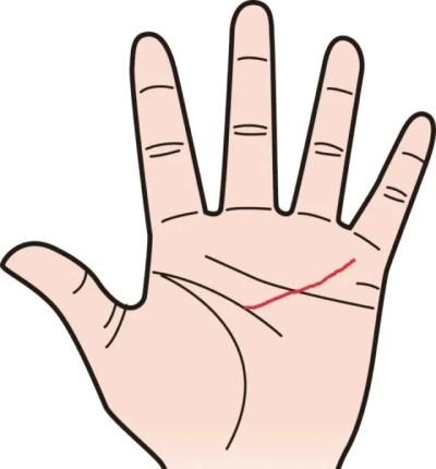 仕事運のある手相⑥商売人向きの証!中指の下で分かれる知能線