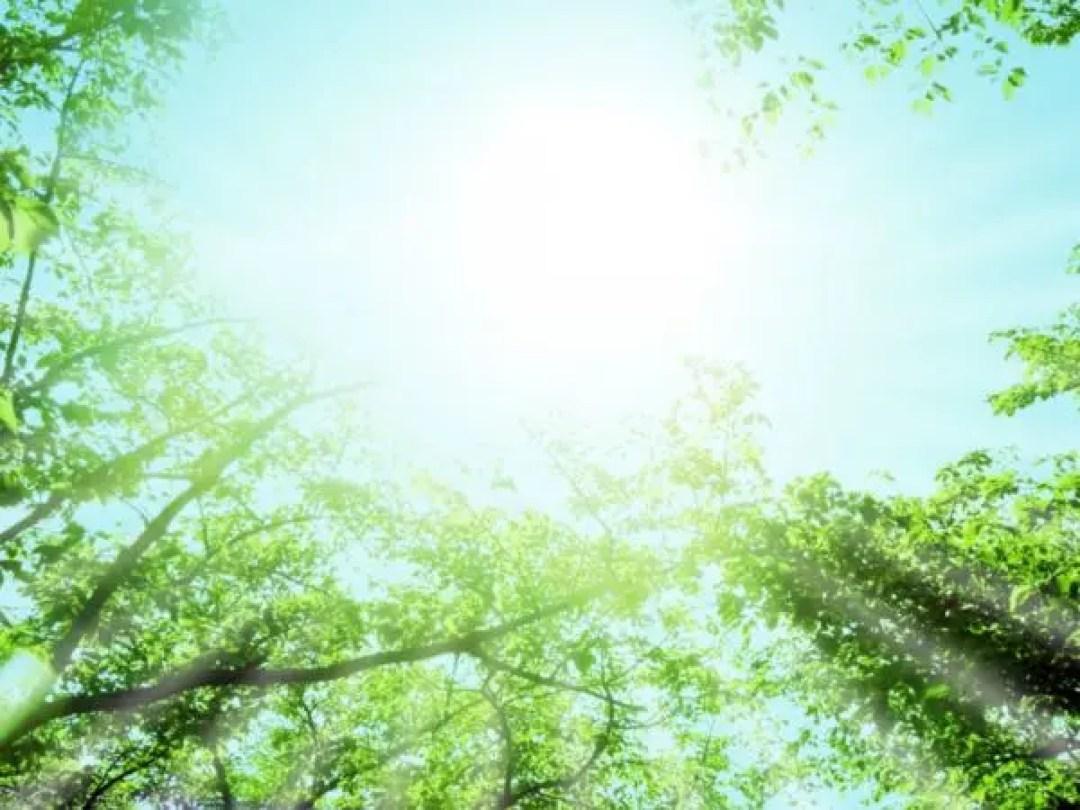 日光浴 森 自然 天 メッセージ