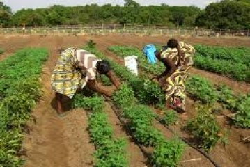 Investment Opportunities in Benin