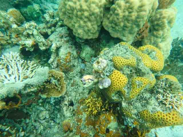 pandan island honda bay palawan philippines