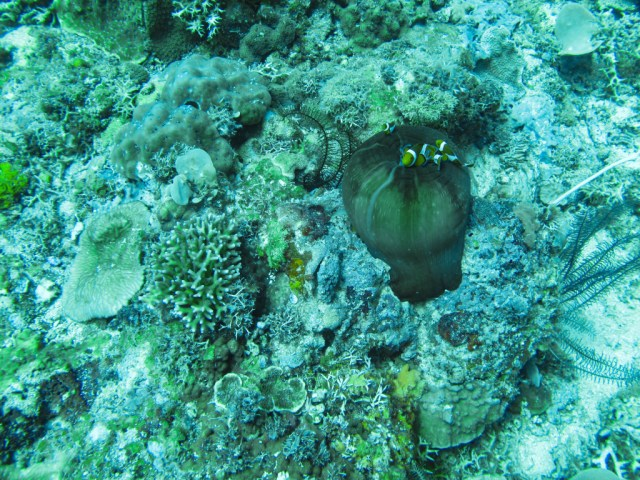 Scuba Diving at Pinagbuyutan Island, El Nido, Palawan, Phlippines
