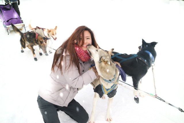 Dog Sled Tour in Lake Louise, Banff National Park