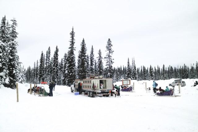 Kingmik dog sledding tour, Lake Louise, Banff