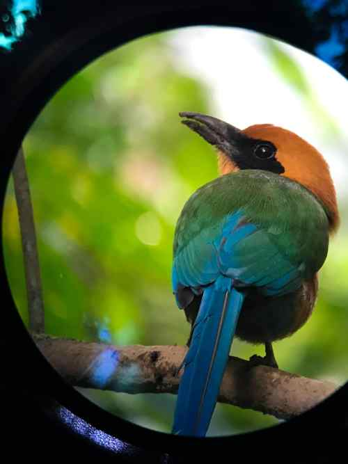 Planning a Trip to Costa Rica Arenal Travel Tips