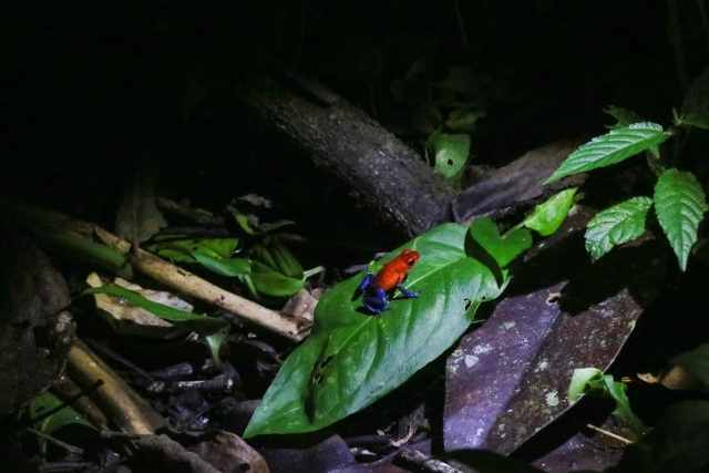 Unforgettable things to do in Costa Rica in November night walk arenal la fortuna