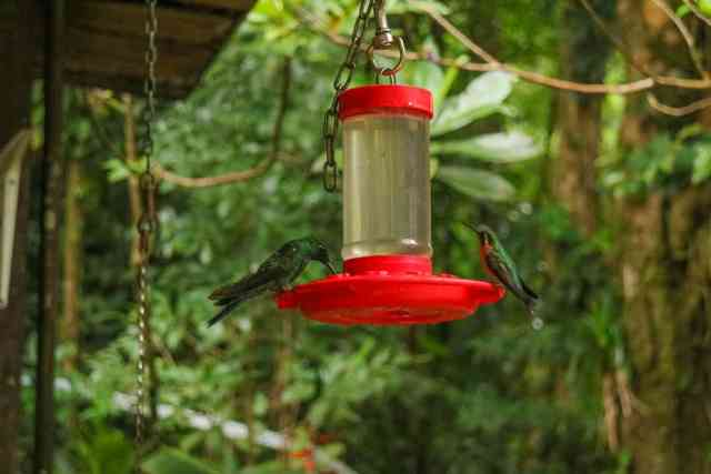 Two Weeks in Costa Rica_Monteverde