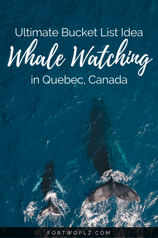 Whale watching is one of the best things to do in Quebec, Canada. Want to know the best spots to meet whales? Which whales you will see? And the best season for it? Check this post for everything you need to know to plan an epicwhale watchingadventure in Tadoussac,Quebec. #travealcanada#travelguide#tripplanning#traveltips#quebec#itinerary#thingstodo #adventuretravel#nature#wildlife#whalewatching #beluga #whales #humpback #humpbackwhales #belugawhale #bucketlist #traveldestinations #wanderlust #roadtrip