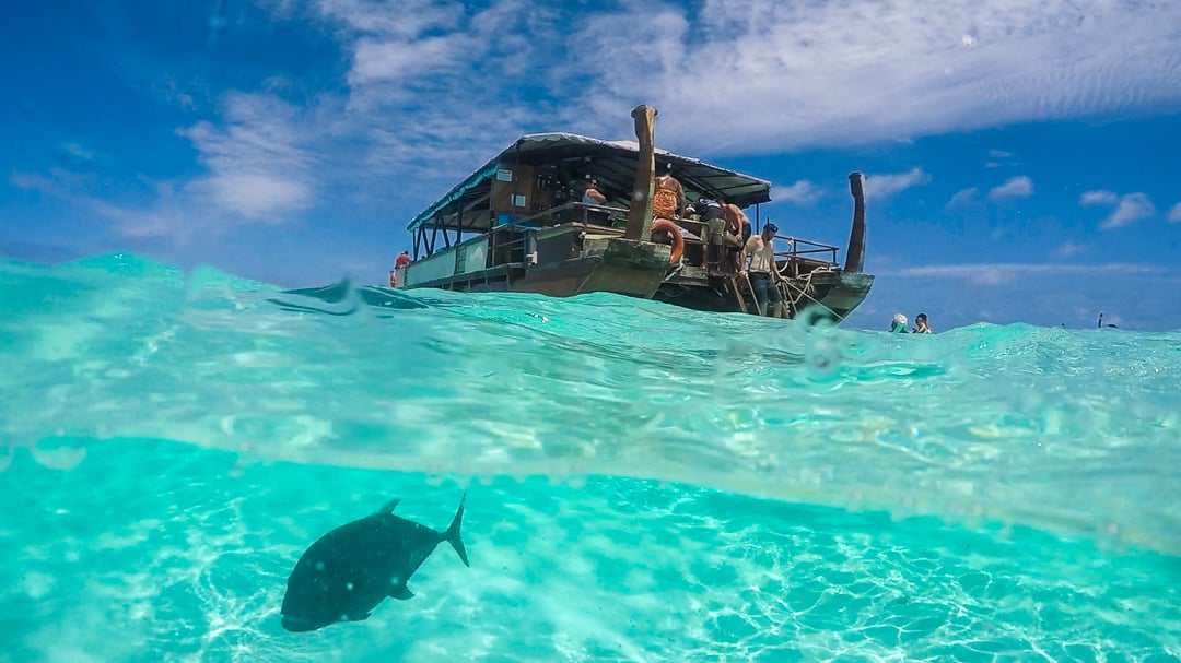 Swimming with giant Trevally in the Cook Islands by Cat (Fortwoplz)