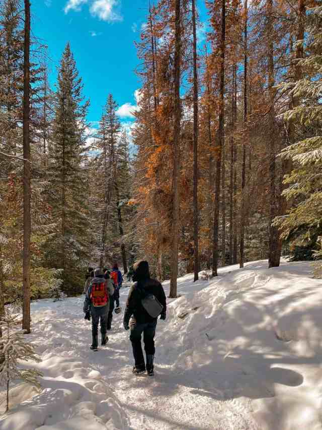Maligne Canyon Hike Jasper Winter
