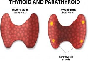 Thyroidectomy (Thyroid Surgery) Fort Worth ENT