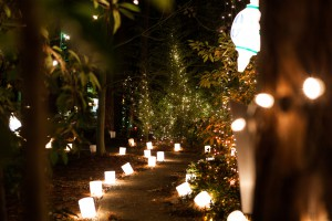 A photo of a path at Christmas in Roseland