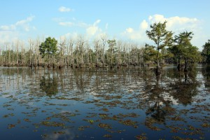 A photo of Lake Bistineau