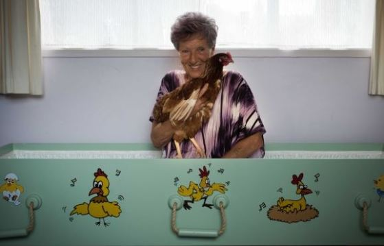 Hühner-Sarg Marke Eigenbau