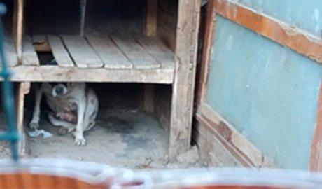 Un gos s'amaga sota unes fustes en mal estat