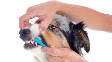 Raspallant les dents a un gos