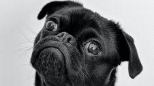 Cura dels ulls d'un gos