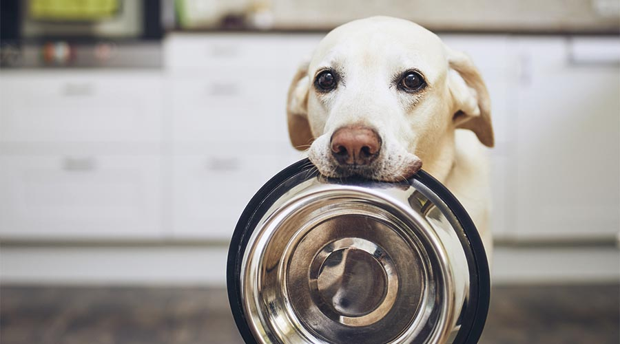 Gos amb un plat de menjar