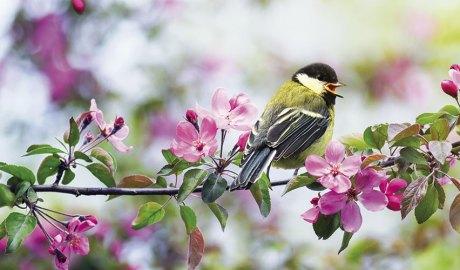 Ocell en una branca florida