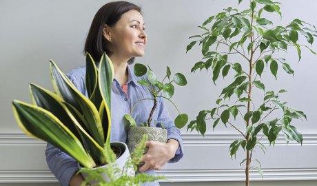 Tests i plantes