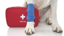 Maletí de primers auxilis per a gos