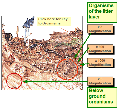 soil layers diagram pool timer wiring intermatic what is the difference between and compost? importance of - page 2 susana forum