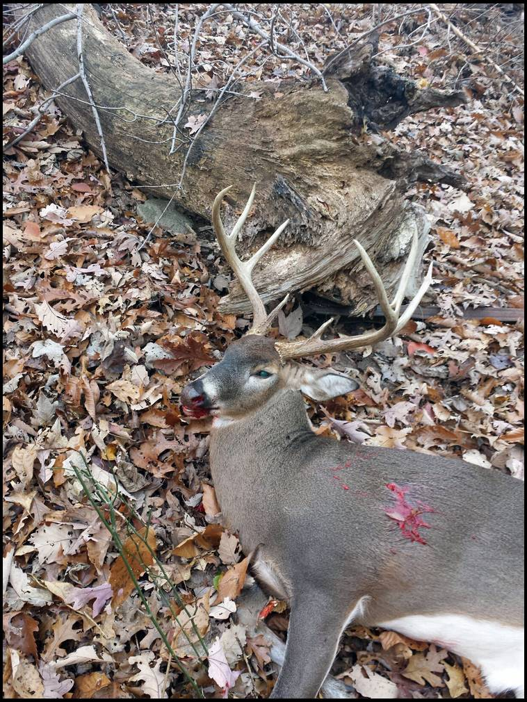 Ground Hunting technique for Whitetail