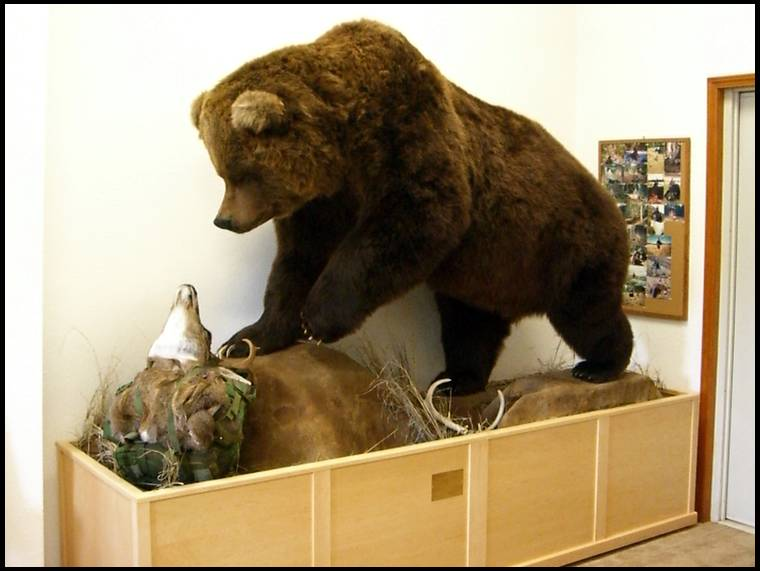 Full body grizzly mounts