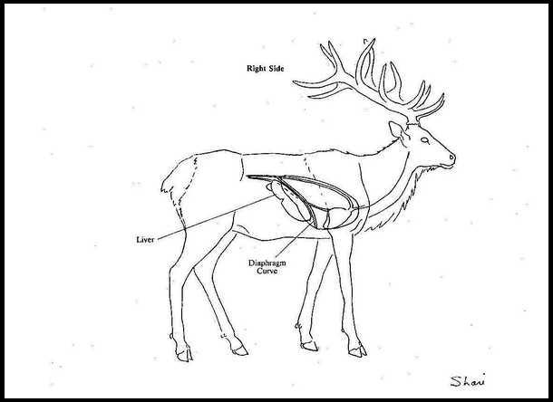 Elk Schematics