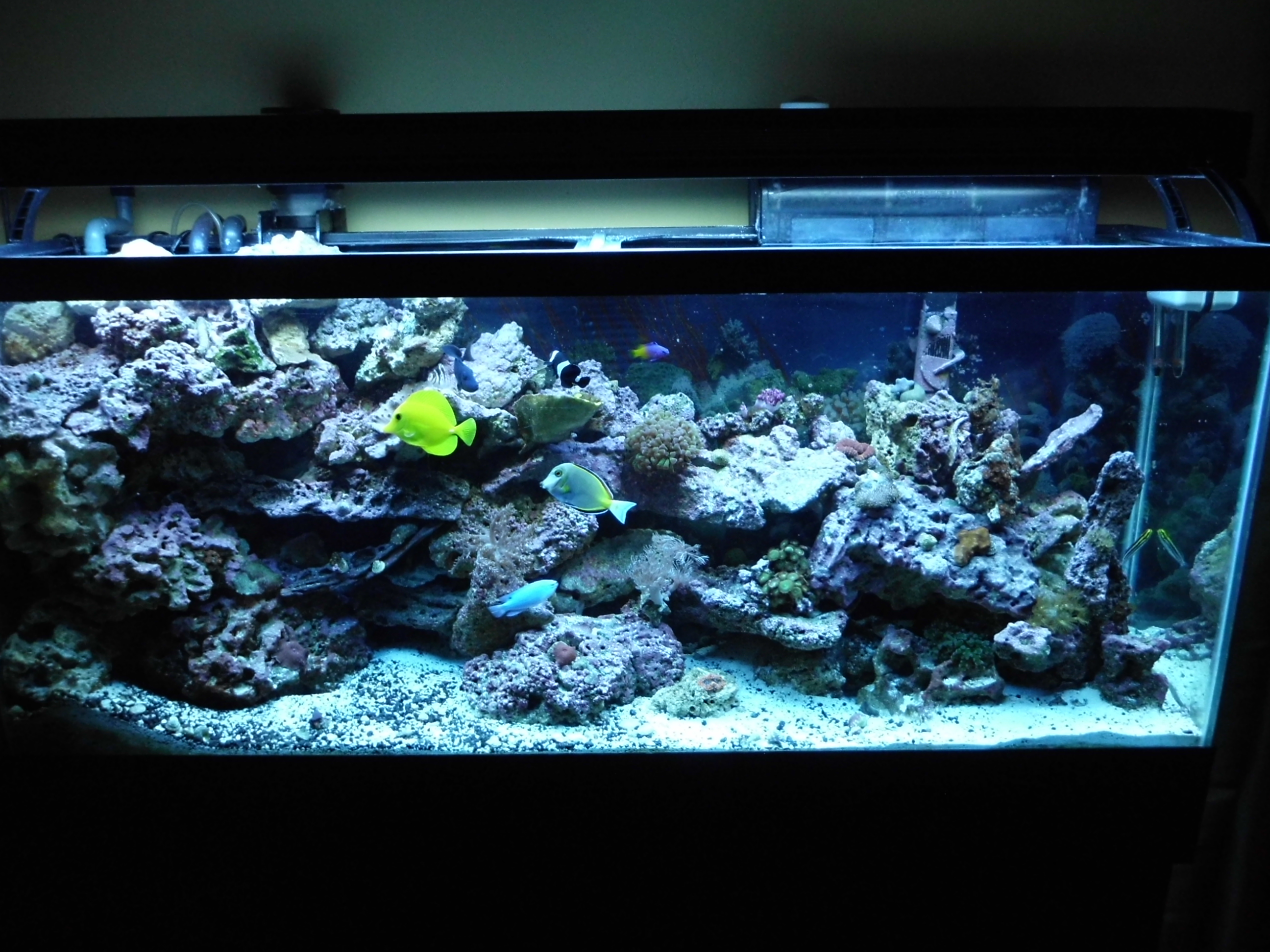 55 Gallon Setup Saltwater Aquarium