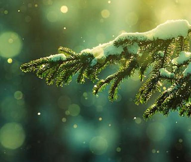 Snowgreen Phone Hd Wallpaper Jpg