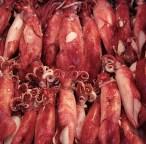 Squid at Tsukiji Market