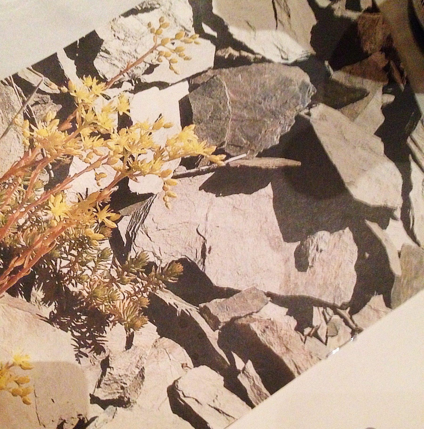 Slate soil in Mosel