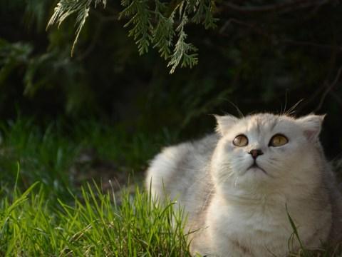 Фотосессия животных
