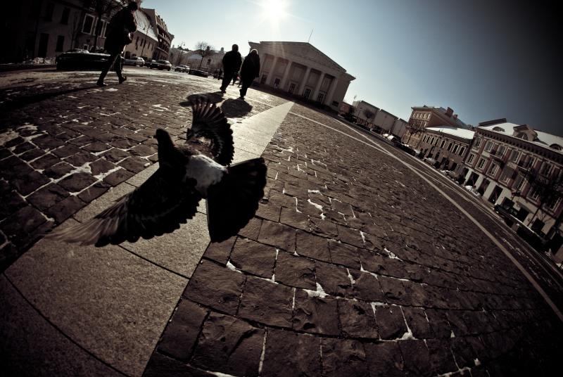 Vilniaus haliucinacijos