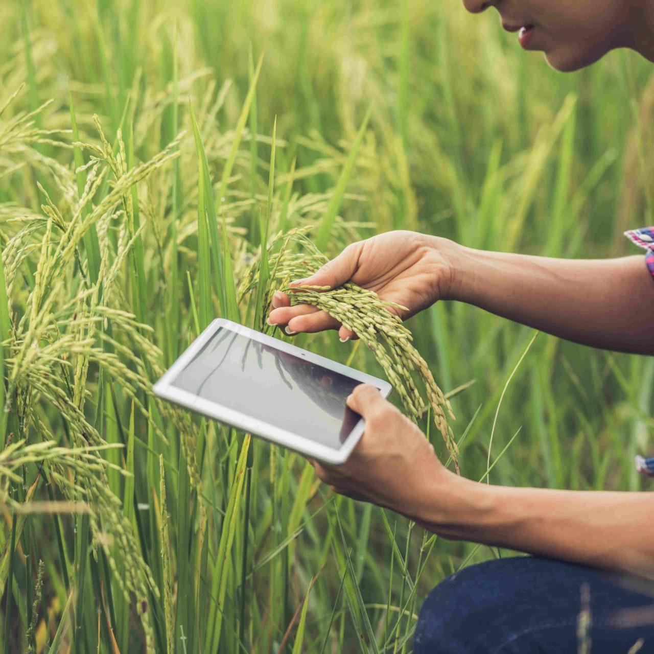 soluciones iot en agricultura