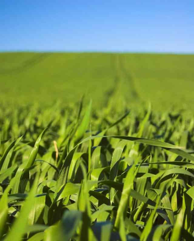 IoT solutions for agriculture