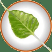 Bodhi Linux logo