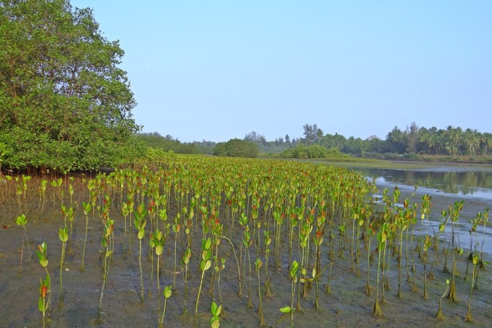 mangrove-249920_960_720