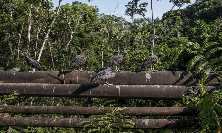 Photo of Cultural Resources, Environmental Conservation, and Oil Production: Ecuador's Struggle to Find a Balance
