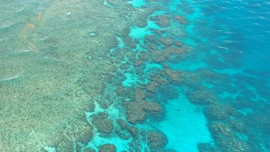 Photo of Coal vs Coral: How the Australian Coal Industry Threatens the Existence of the Great Barrier Reef