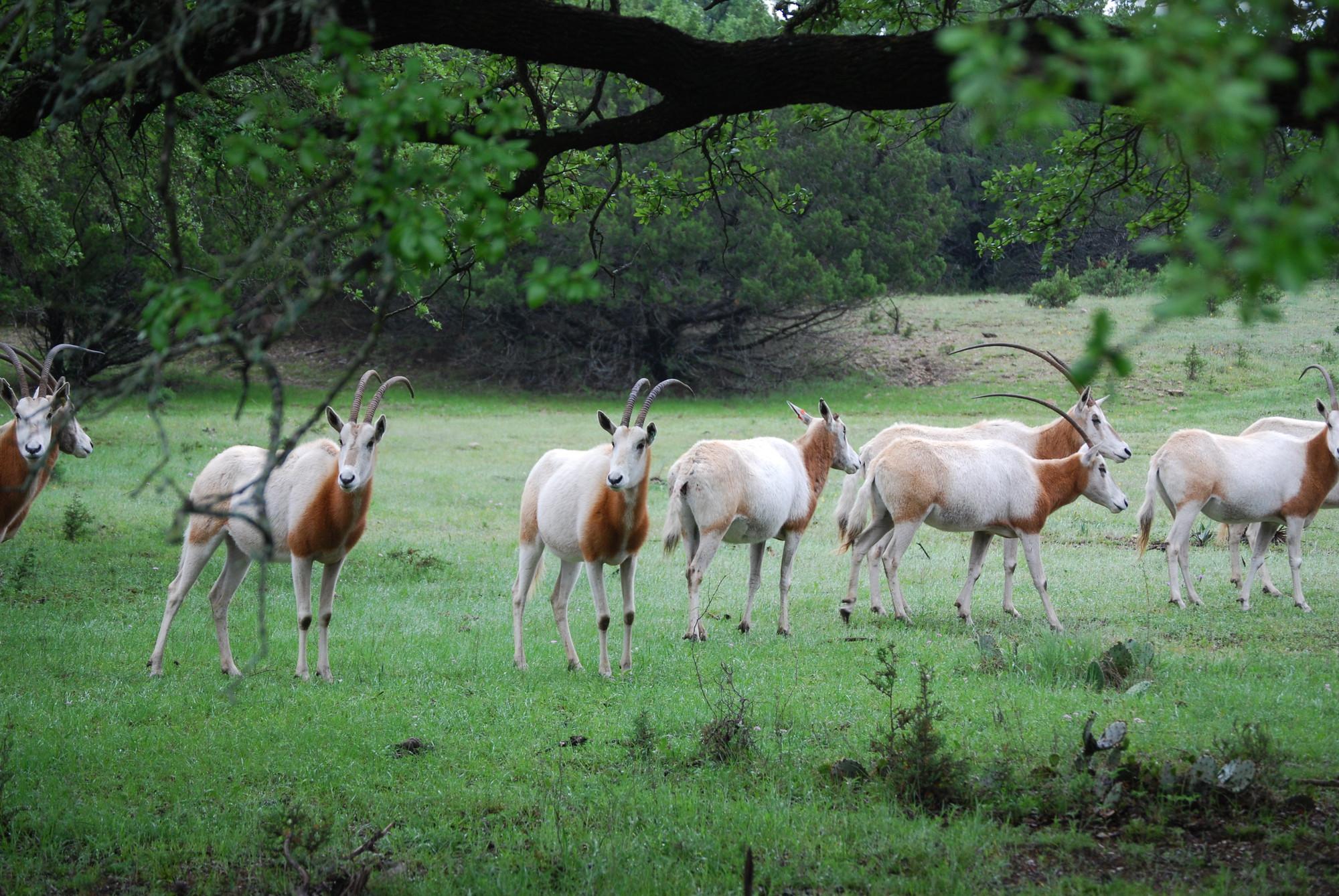 Glasplatte Fr Herd Best Von Mm Esg Glas Herd Glasplatte Rckwand With Glasplatte Fr Herd