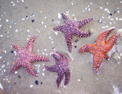 starfish stranded on the beach