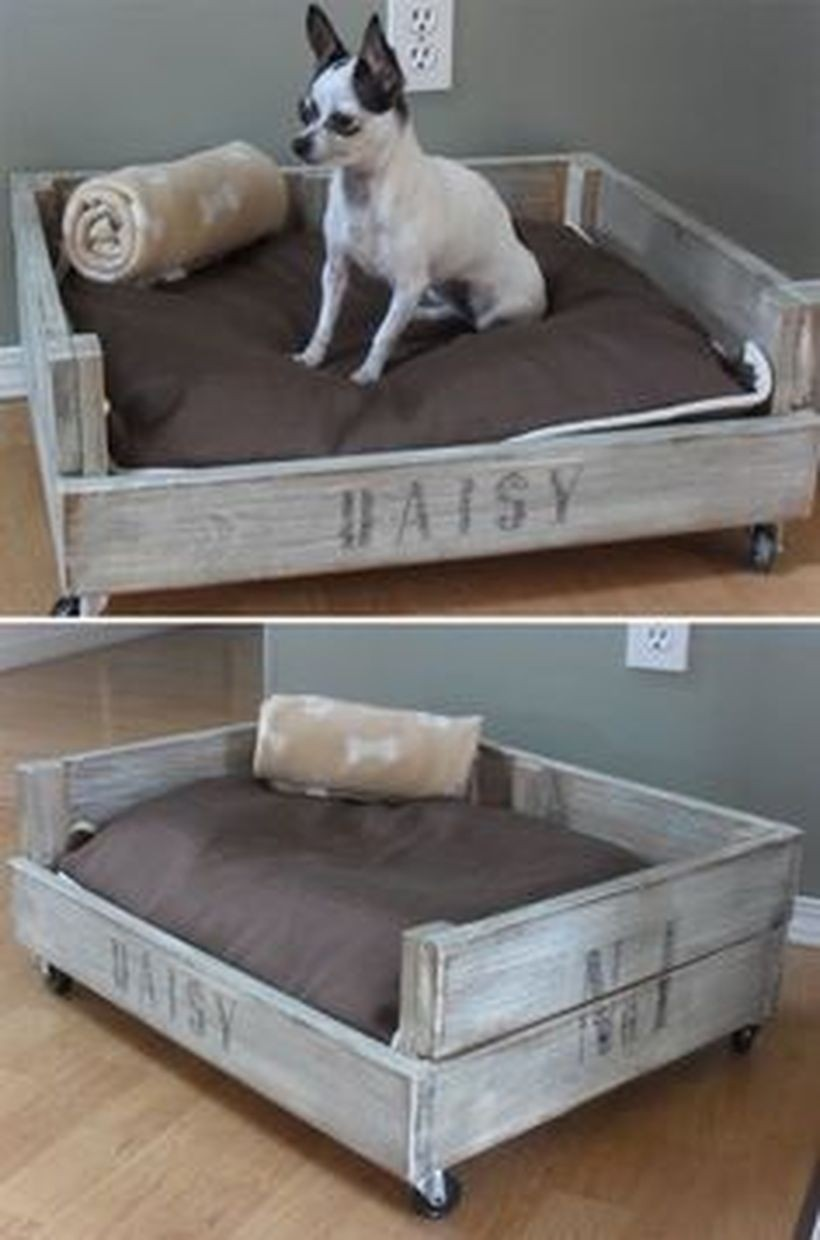 Dog Bed Attached To Human Bed : attached, human, Furniture, Ideas, Foter