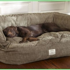 What Is The Best Living Room Furniture For Dogs Pictures Of Placement Pet Couch Bed Ideas On Foter How To Build An Elevated Dog